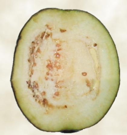 File:Eggplant-sliced.png