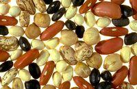 Dry bean
