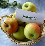 File:Jonagold.jpg