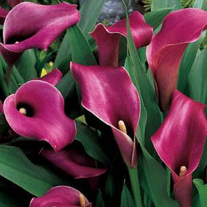 File:LavenderGem.jpg