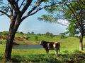 El paisaje / The landscape.jpg