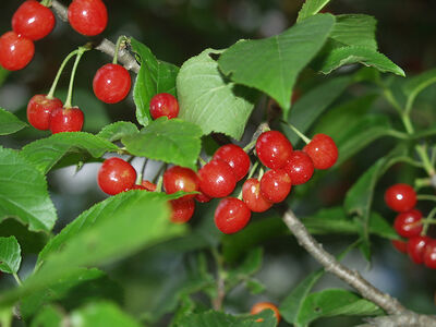 Fruitpage2