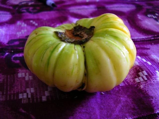 File:Bitter tomato.jpg