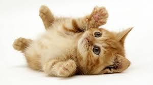 File:Kitten!!!.png