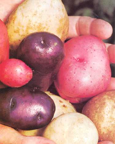 File:StrawPotatoes.jpg