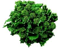 File:BroccolRabe.jpg