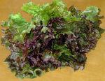 Lettuce redleaf