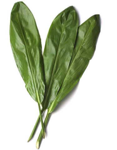 File:TiLeaves.jpg
