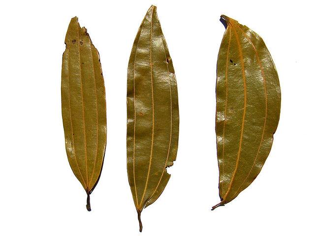 File:Indian bay leaf.jpg