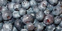 Blueberries with Lemon and Honey Dressing