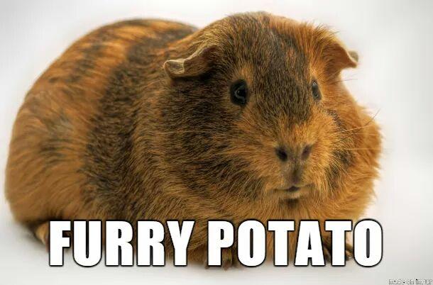 File:Furrypotato.jpg