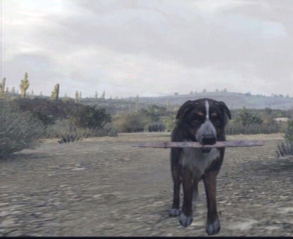 File:Dog-fetching-stick.jpg