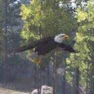 Eagle-04