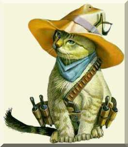 Uz cowboy cat