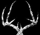 Buck Antlers
