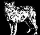 Wolf Pelt