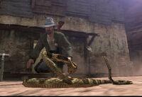 Rattlesnake-eyeing-Heath-Michaels