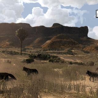 <b>Lobos</b> en las llanuras de <a href=