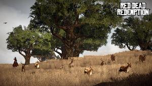 Deers and Bucks