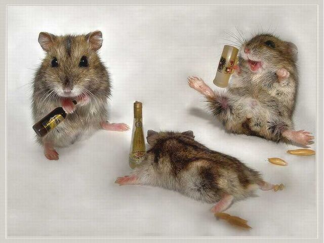 File:Drunk-Mice-animal-humor-1993688-1024-768.jpg