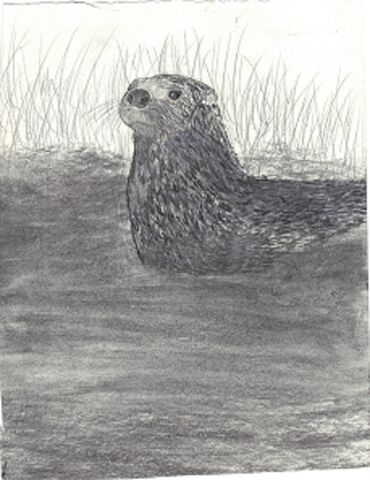File:Otter in the rushes.jpg