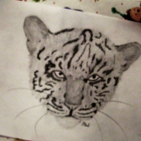 File:A Tiger.JPG
