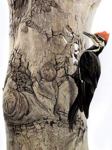 File:Wood.jpg