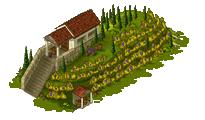 Vineyard level 3