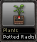 Plants Potted Radish