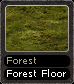 Forest Forest Floor