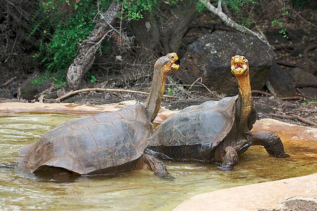 File:Galapagos dominance display.jpg