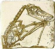 250px-Scaphognathus crassirostris