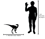 File:Human and Eoraptor sizeComparison.png