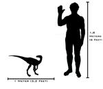Human and Eoraptor sizeComparison
