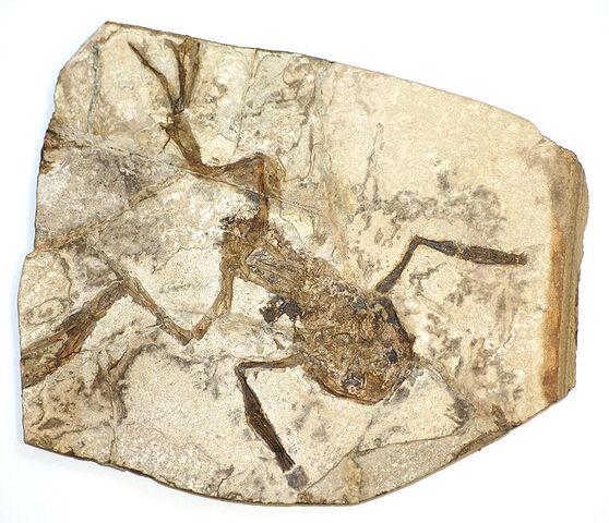 File:Frog fossil.jpg