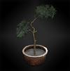 Plant (lanshiang) diorama