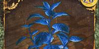 Blue Herb