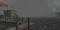 Raccoon Pier