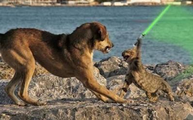 File:398px-Jedicatswing.jpg