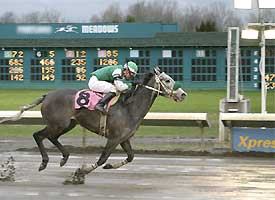 Contest Horse
