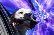 20130529-12523135-warpdogs6