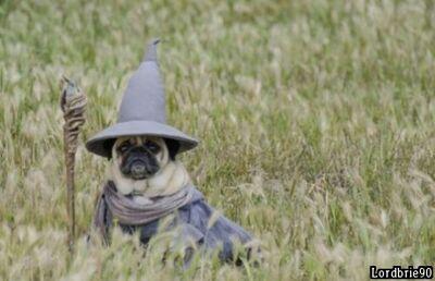 Pug wizard