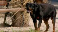 Revolution dog