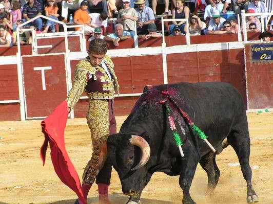 File:Bull.jpg