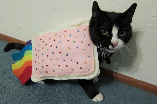 File:Kaiser Wilhelm II's cat.jpg