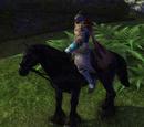 Chocolate Horse Bridle