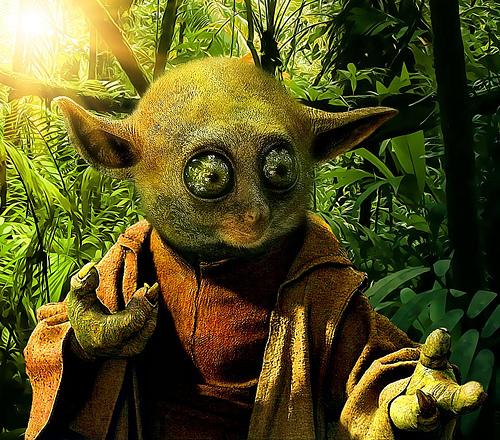 File:Yoda Tarsier.jpg