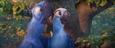 Blu and Jewel