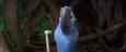 Rio-2-Blu's-Toothbrush
