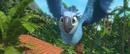Jewel flying on Rio